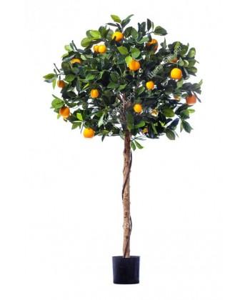 Мандарин Голден Оранж штамбовый, 120 см