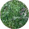 Зеленый мох (лесной)