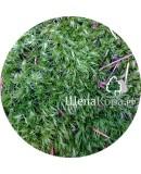 Мох зеленый, 30х40 см