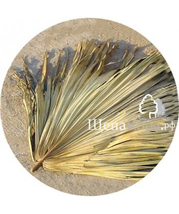 Пальмовые листья в упаковке 25 шт (натуральные)