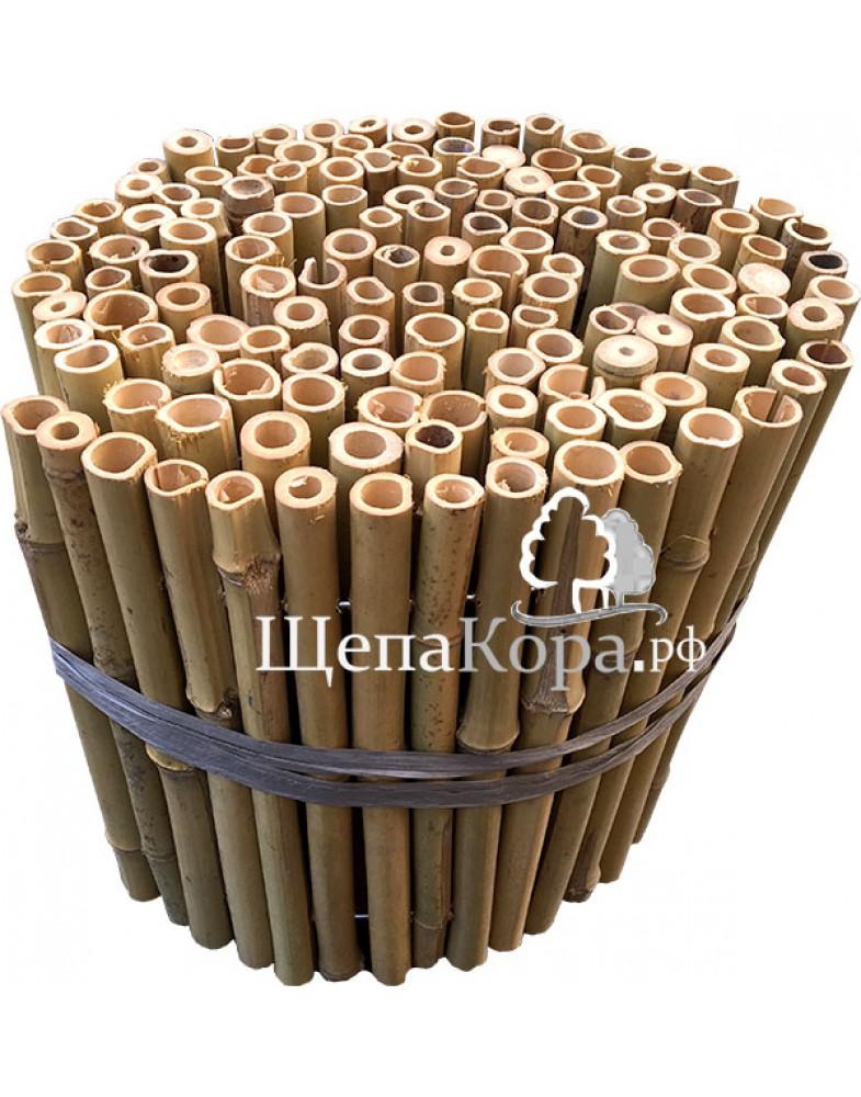 Бамбуковый забор 30см