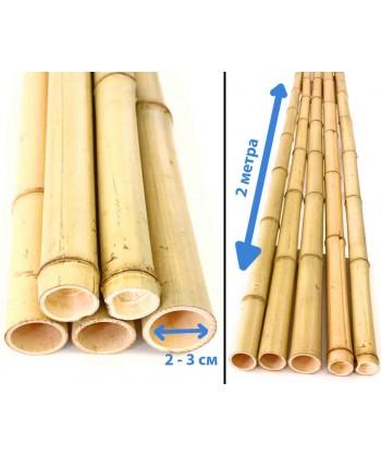 Ствол бамбука светлый, диаметр 2-3 см