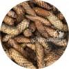 Шишки: еловые и сосновые