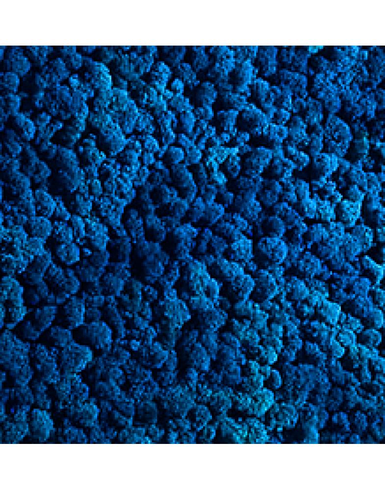 Мох стабилизированный (голубой)