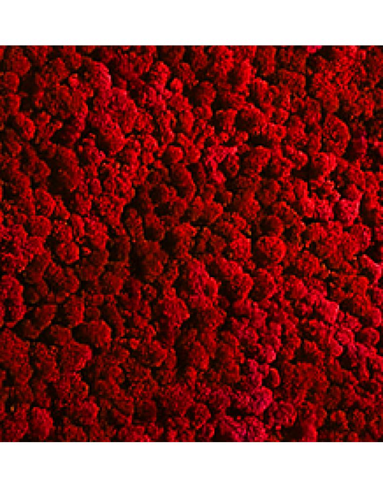 Мох стабилизированный (красный)