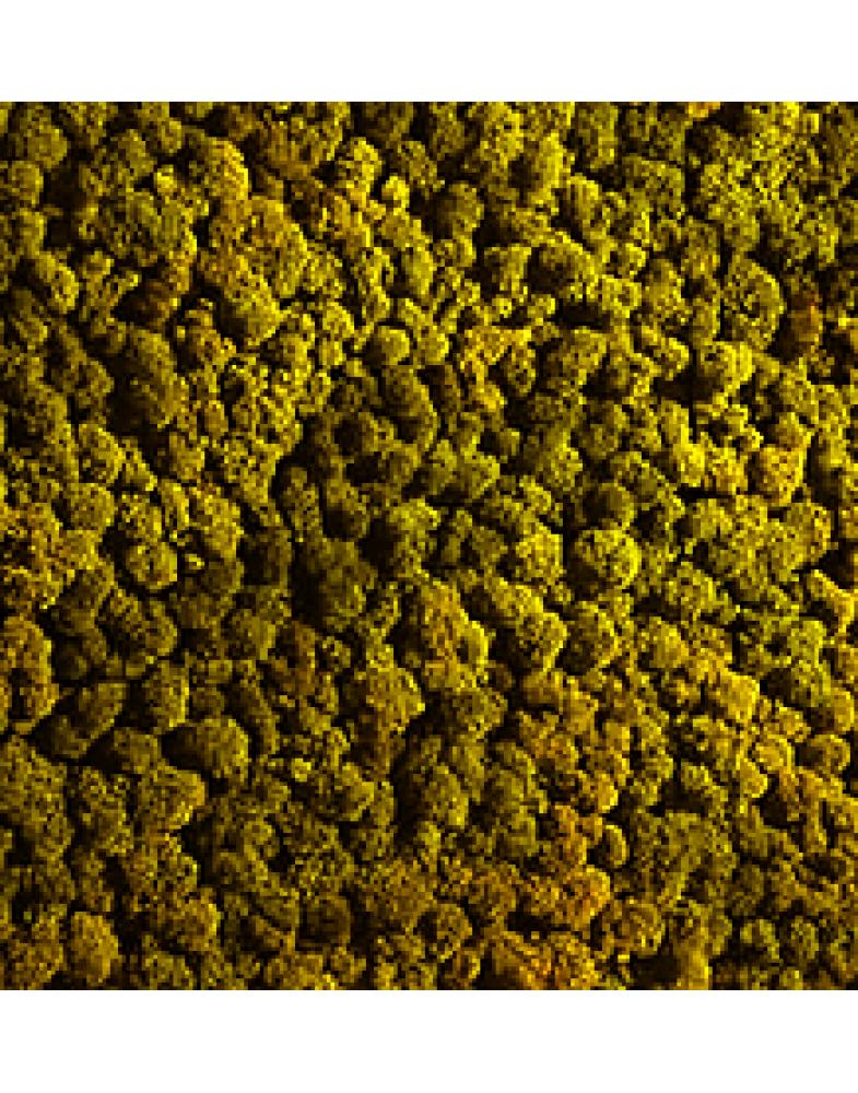 Мох стабилизированный (лимон)