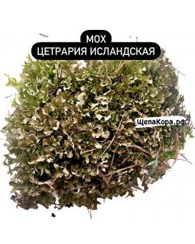 Исландский мох цетрария, 30х40 см, 200 гр