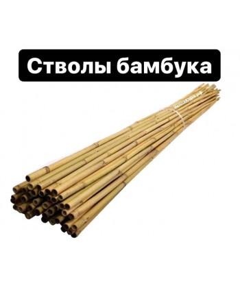 Ствол бамбука тонкинский, 10-12 мм, 2,1 м