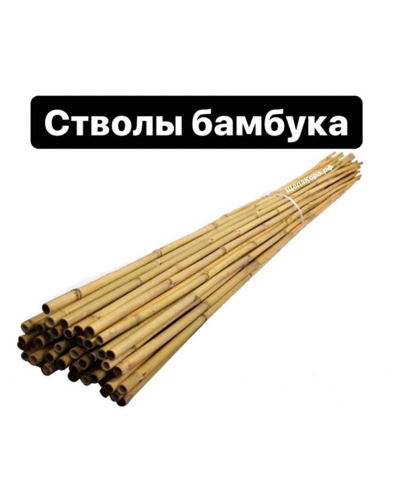 Тонкинский бамбук 10-12 мм