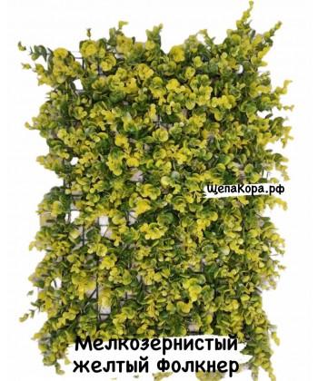 Фолкнер жёлтый, 40х60 см