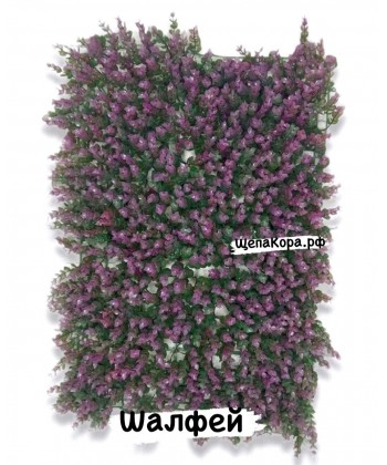 Шалфей, 40х60 см