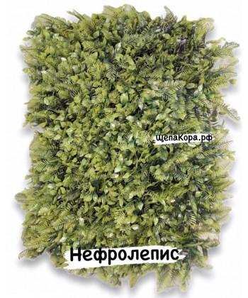 Нефролепис, 40х60 см