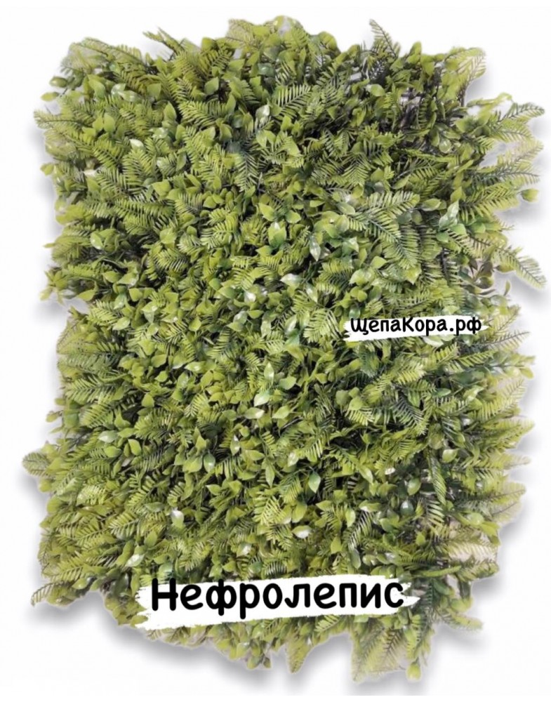 Нефролепис  40х60 см