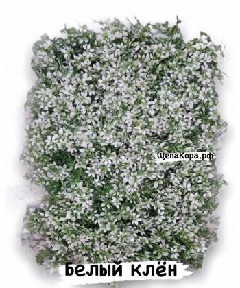 Белый клён, 40х60 см