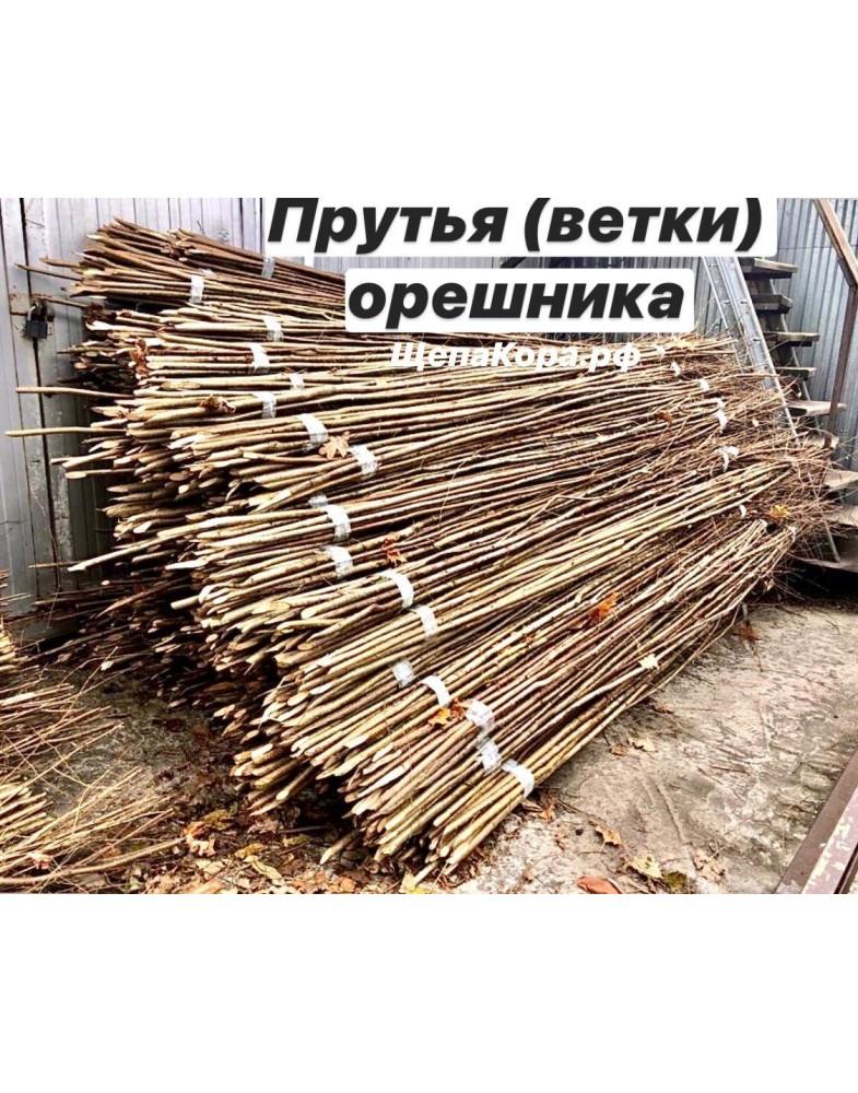 Ветки из орешника или прутья высотой до 3-х метров