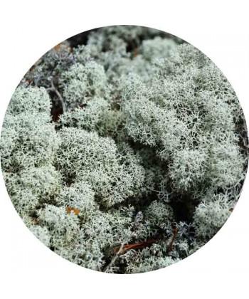 Олений мох, в мешках 50 л