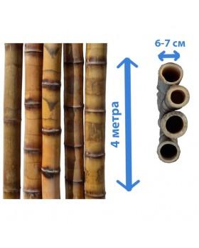 Ствол бамбука леопардовый, Ø 6-7 см, длина 4 метра