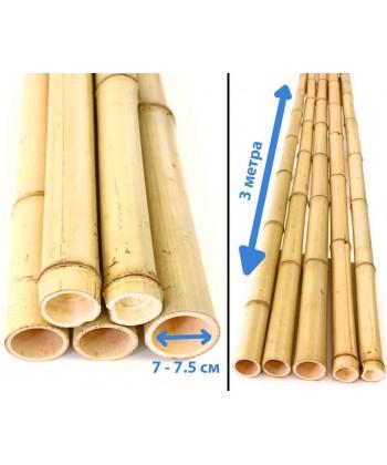 Ствол бамбука натуральный, диаметр 7-7.5 см