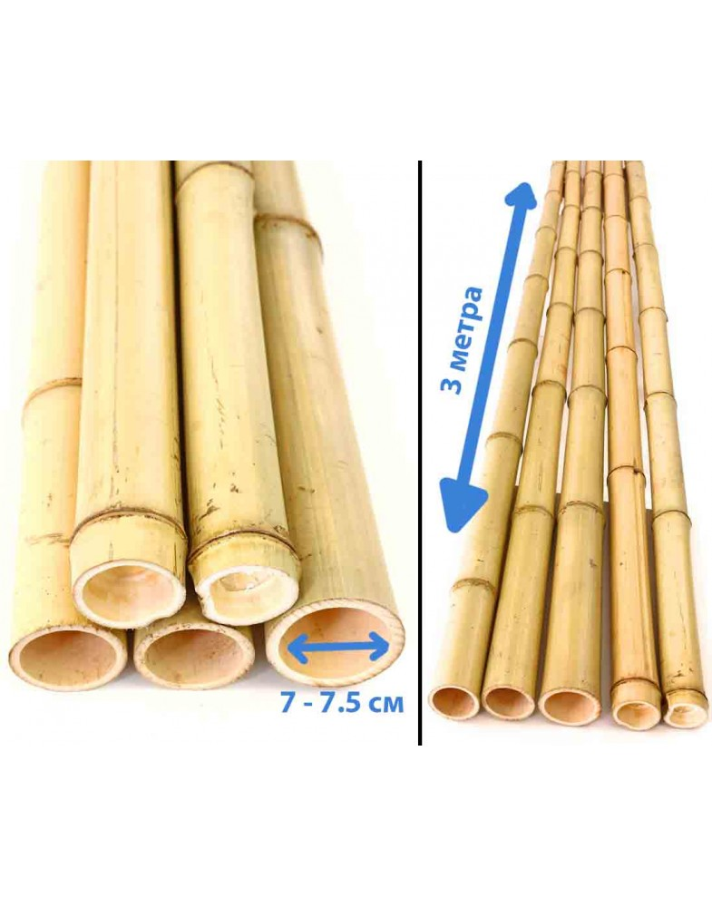 Ствол бамбука 3 метра, Ø 7 см