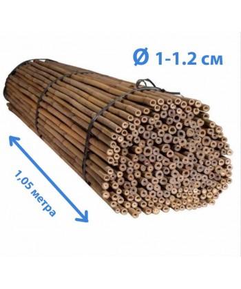 Ствол бамбука тонкинский, диаметр 1-1.2 см