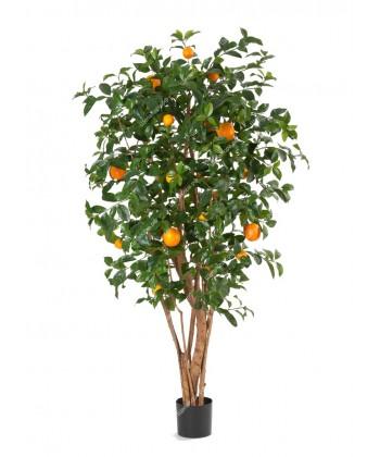 Апельсиновое дерево с плодами, 180см
