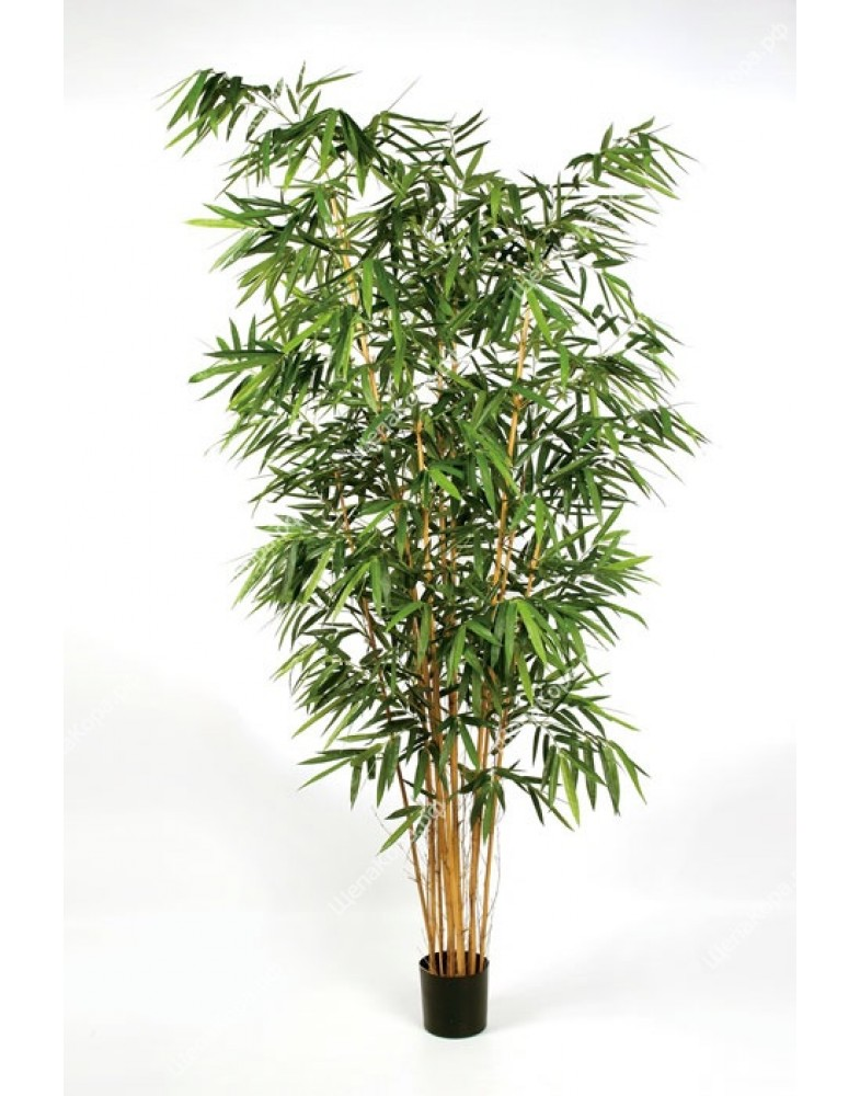 Бамбук Новый Биг Лиф