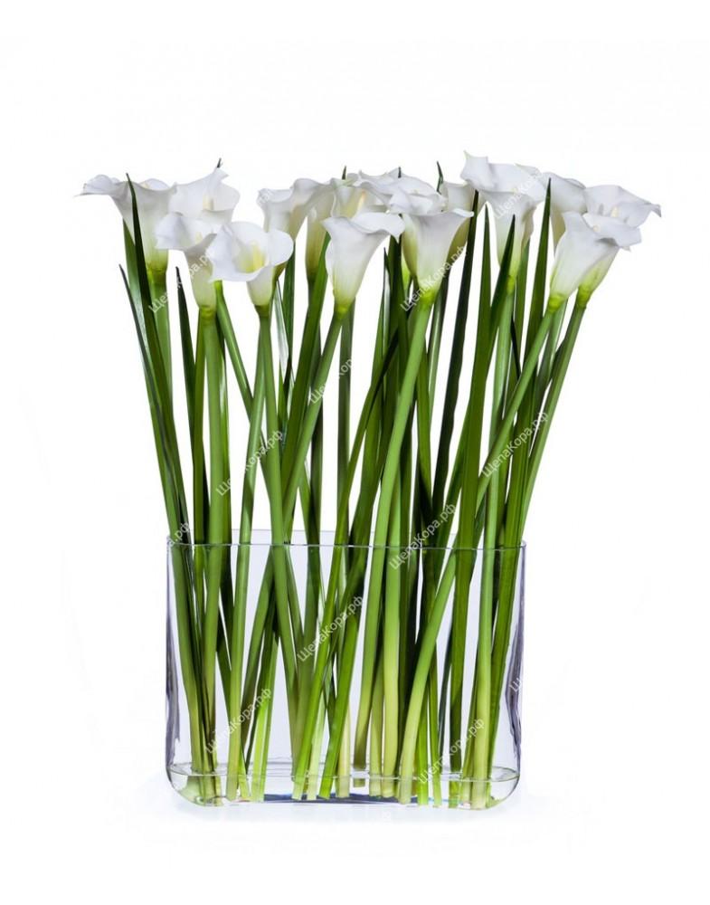 Каллы белые (17 цветов) в прямоугольном дизайн-стекле с водой