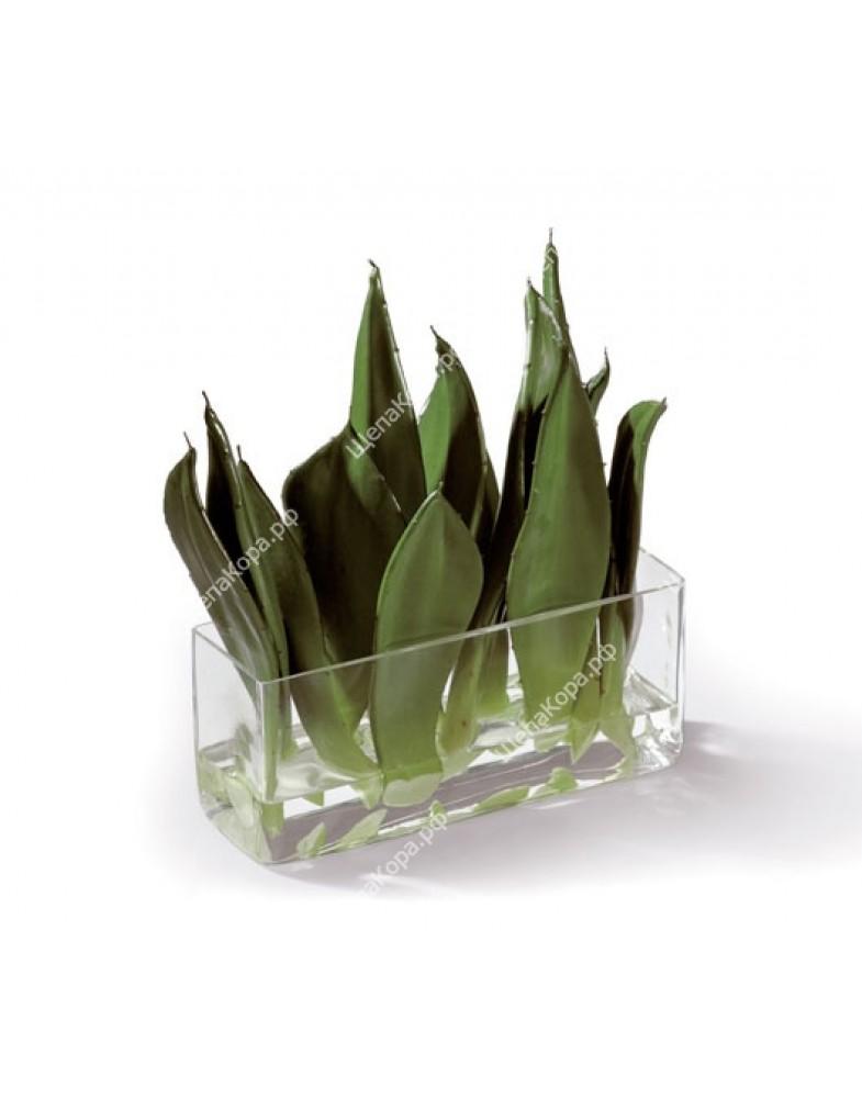 Композиция Листы Алоэ в стекле с водой, 30 см
