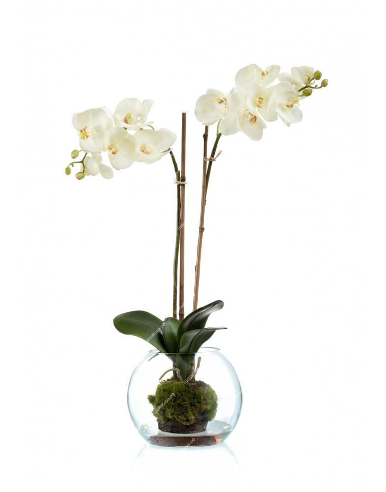 Композиция Орхидея Фаленопсис (SRTouh) 2 ветки в стекл.шаре с мхом,землей, водой, 65см