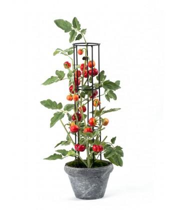 Мини-Помидорчики на решетке куст в керамическом кашпо, 65см