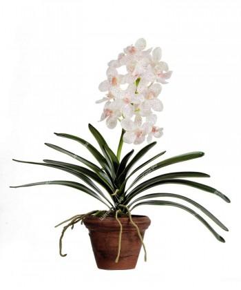 Орхидея Ванда кремовая с розовой крапинкой в терракотовом кашпо