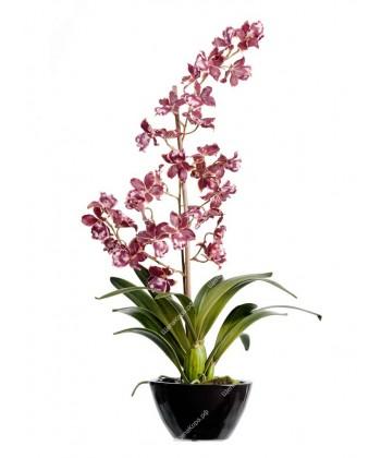Орхидея Дендробиум бургундия с белым в коричнево-бордовом кашпо, 65см
