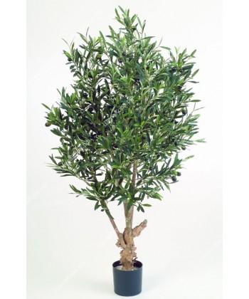 Олива Твист натуральная с плодами