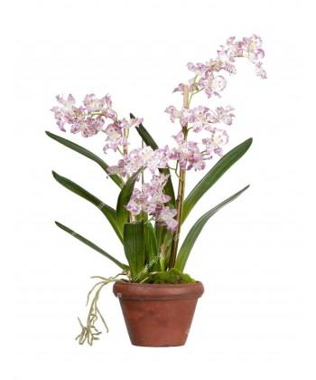 Орхидея Дендробиум сиренево-белая в терракотовом кашпо, 60см