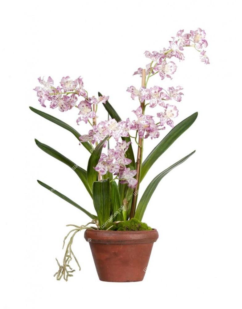 Орхидея Дендробиум сиренево-белая в терракотовом кашпо