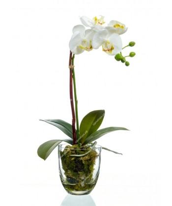 Орхидея Фаленопсис белая куст в стеклянной вазе с мхом, корнями, землей