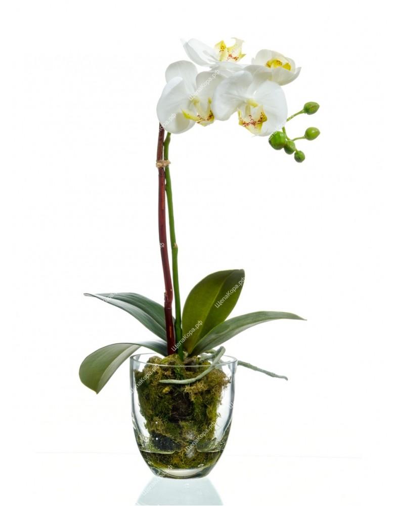 Орхидея Фаленопсис белая куст в стеклянной вазе
