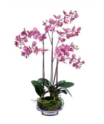 Орхидея Фаленопсис темно-сиреневая в стекле со мхом, корнями, землей