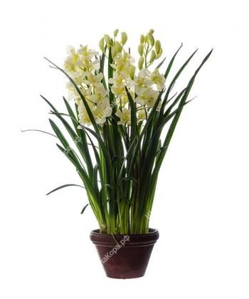 Орхидея Цимбидиум большой куст в кашпо, 115см