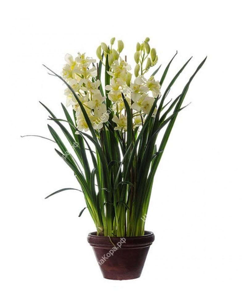 Орхидея Цимбидиум большой куст в кашпо