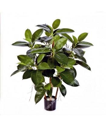 Фикус Эластика куст зеленый, 90 см