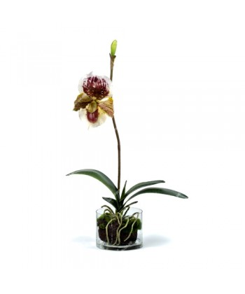 Композиция Орхидея Венерин Башмачок бургундия в стекле с мхом, корнями, землей, 52см