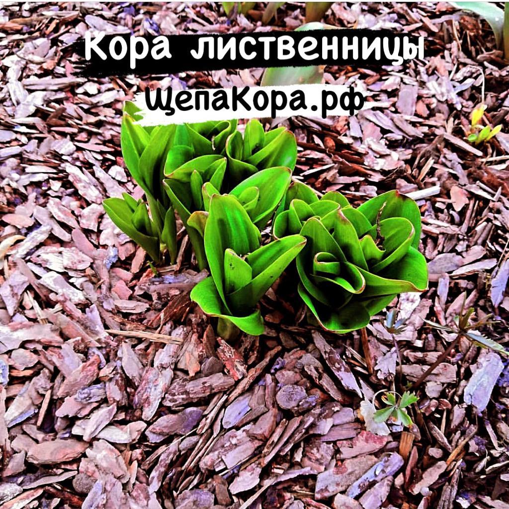 декоративная кора лиственницы 2-5 см
