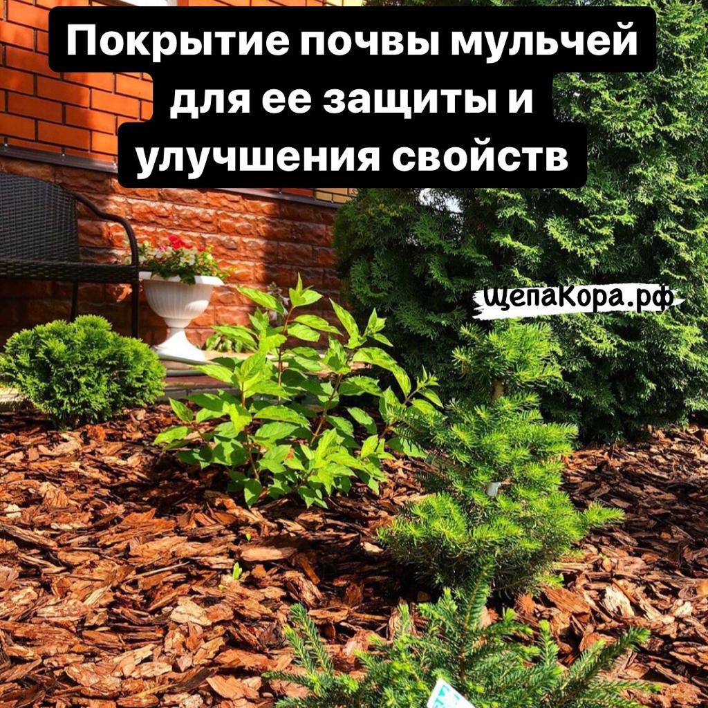 покрытие мульчей почвы для ее защиты и улучшения свойств почвы